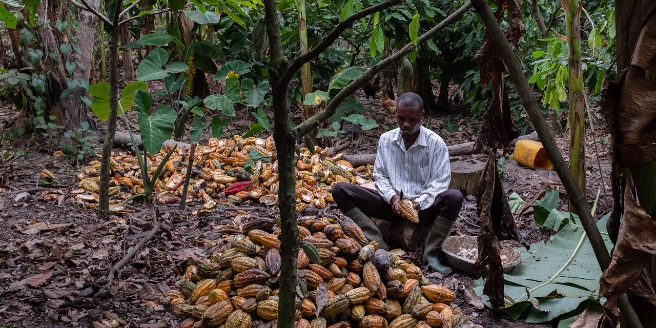New Cocoa Cartel Could Overhaul Global Chocolate Industry